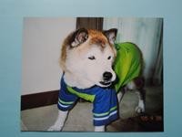 ペット犬のリアルな肖像画(似顔絵)を注文(オーダーメイド)する際に送る見本写真