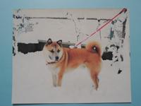 ペット犬のリアルな似顔絵を注文(オーダーメイド)する際に送る見本写真